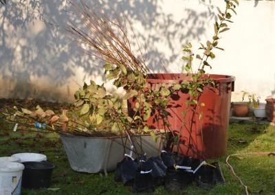 A facsemeték az ültetés előtt