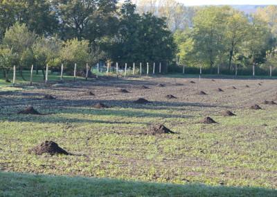 A kész kerítés és a facsemeték helye